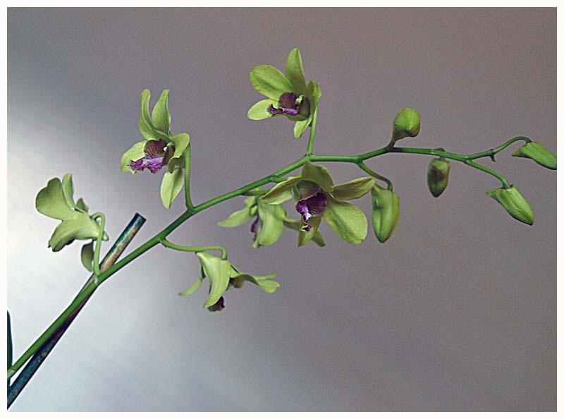 4orchid.jpg