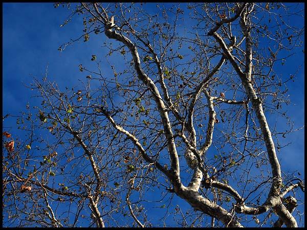 treee0210.jpg