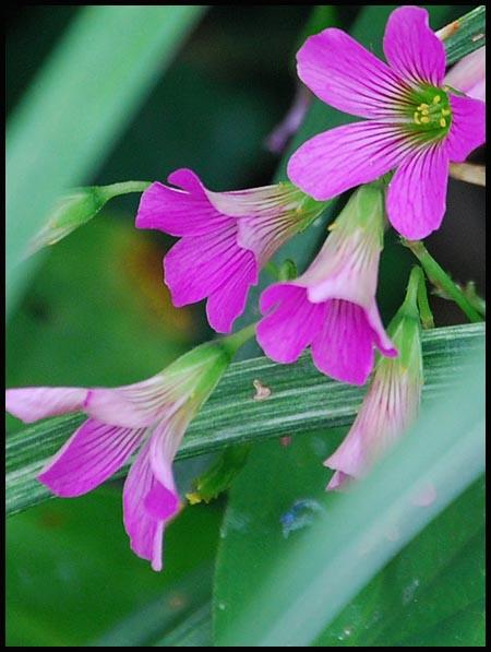 weed613.jpg