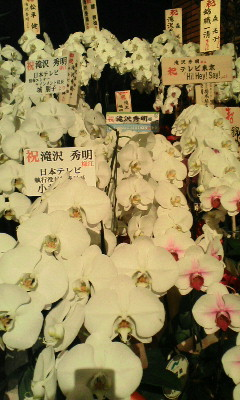 滝沢革命お祝いのお花