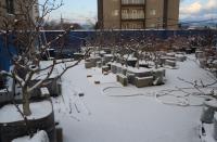 okujyouyori20110116d