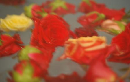 rosebath2010