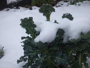 snow_20100310081917.jpg