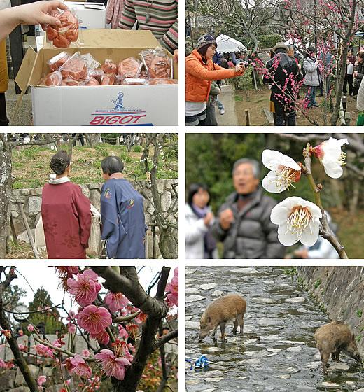 岡本からの梅だより2009