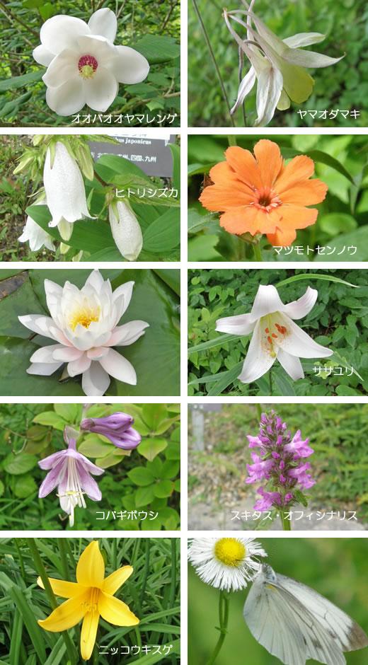 六甲高山植物園2009-2