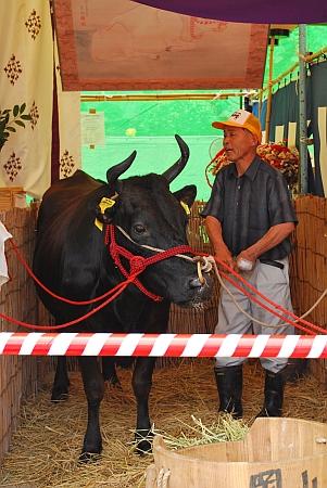 福梅講の牛