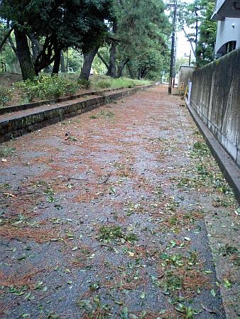 夙川公園の横の道