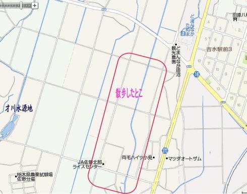 imagekiku.jpg