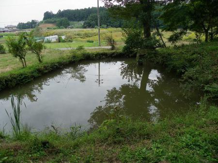 kamotada008.jpg