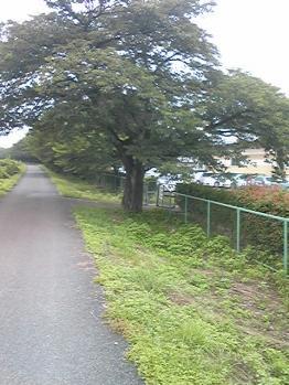 nisihata026.jpg