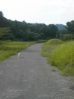 nisihata3018.jpg