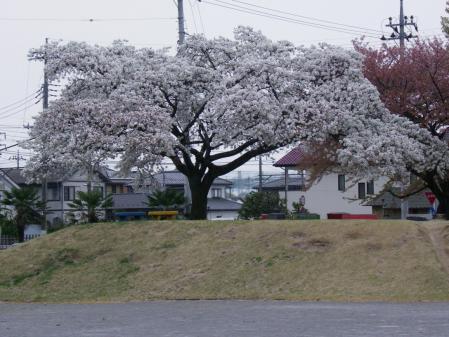 yosidaikouen012.jpg