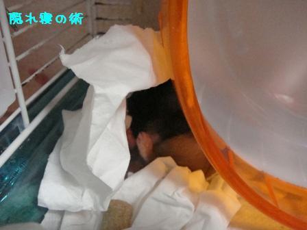 隠れ寝の術