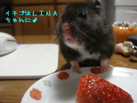 イチゴはLINAちゃんに♪