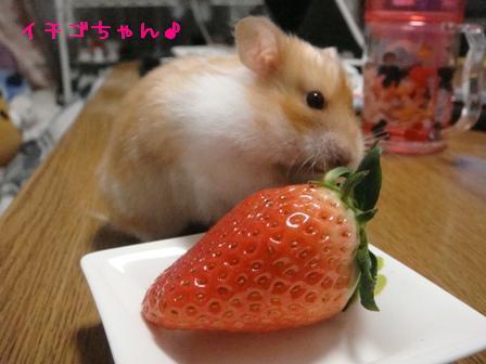 イチゴちゃん♪