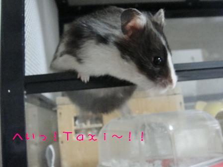 へいっ!Taxi~!!