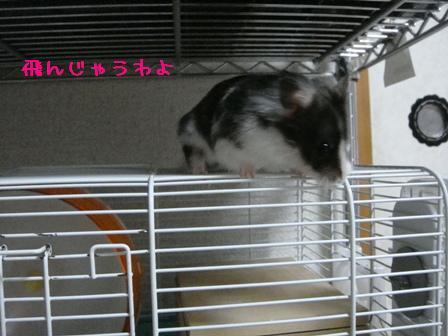飛んじゃうわよ!