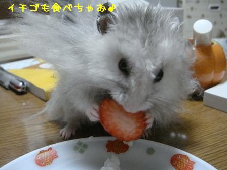 イチゴも食べちゃお♪