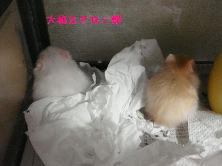 大福&きなこ餅