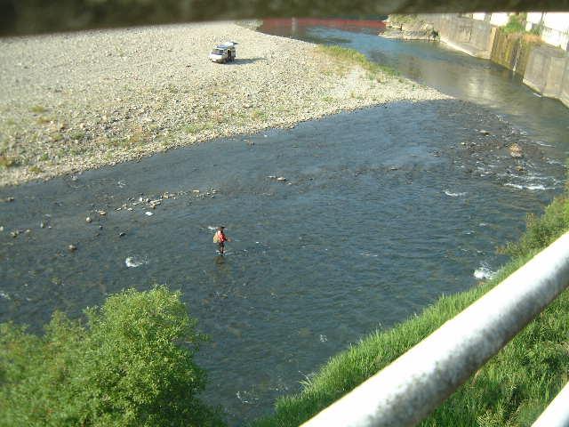 肱川のアユ