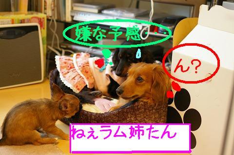 suzu1.jpg