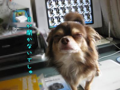 IMG_5603-20090922とらの目