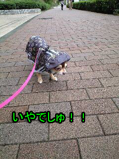 PA0_0695-200910-10雨散歩