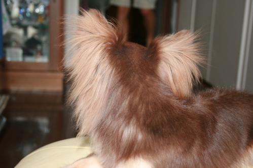 IMG_3239-1 toraの耳