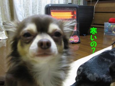 h-IMG_2121.jpg