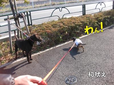 h-IMG_2533.jpg