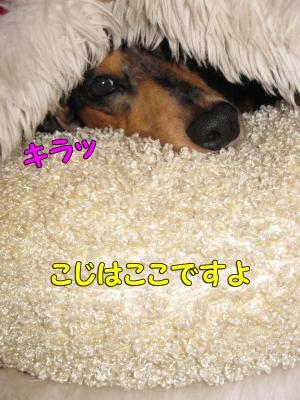 h-IMG_2707-1.jpg