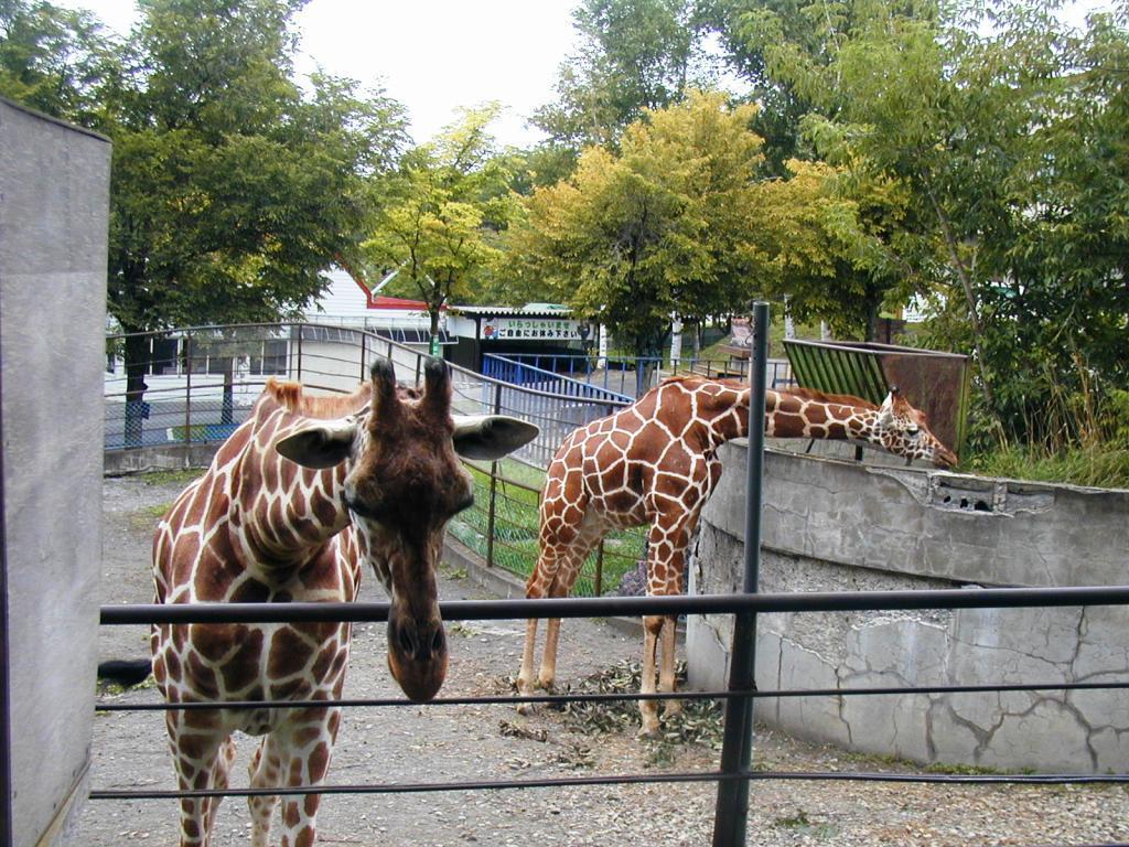 P1010044旭山動物園