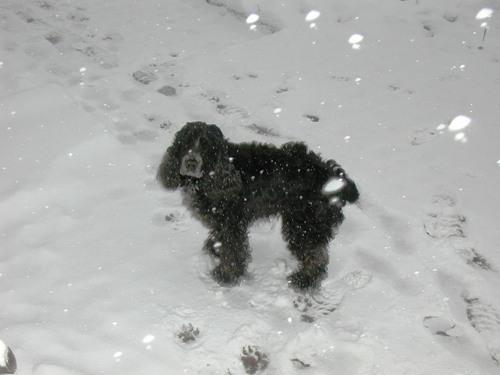 P1010056セシル雪!