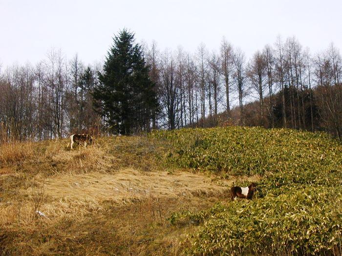 P1010126ツーとポー笹の丘