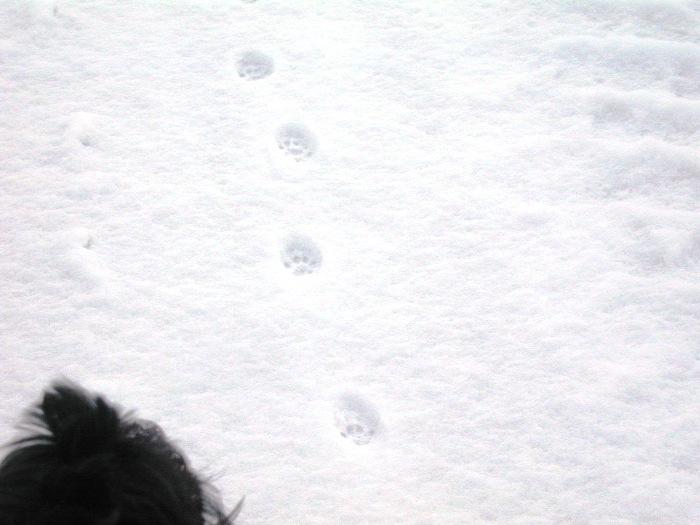 猫の足跡とセシル