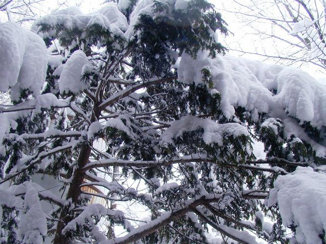 雪どっさり