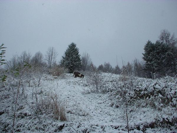 雪の中て?