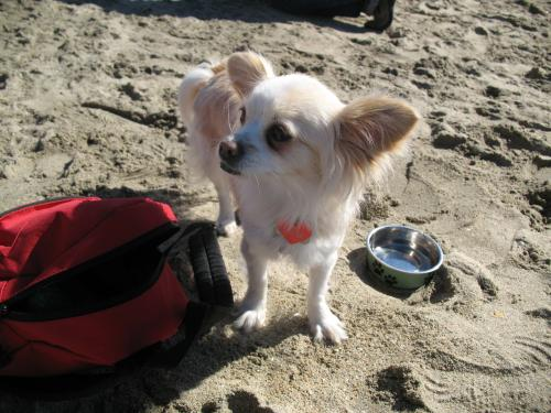 dog+beach+005_convert_20110224060712.jpg