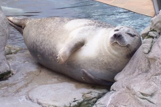 seal sleep