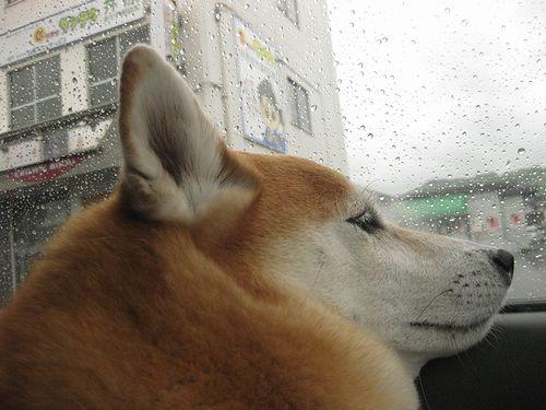 また、雨・・・