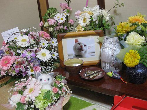 お花が綺麗だニャ~♪