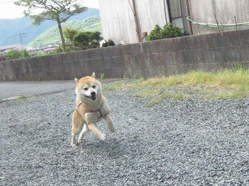 朝だー!散歩だー!!