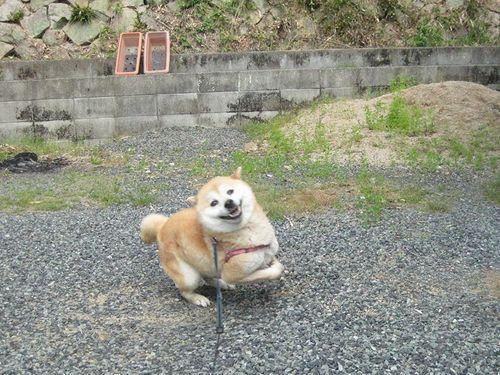 散歩、いくいく~♪