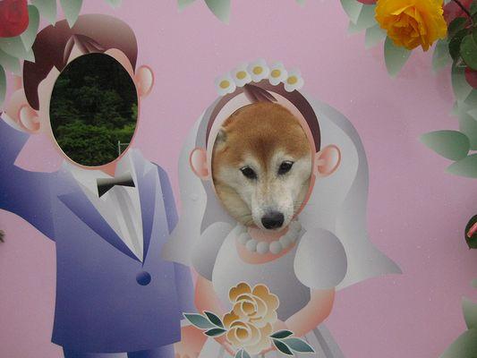 お嫁にいきます