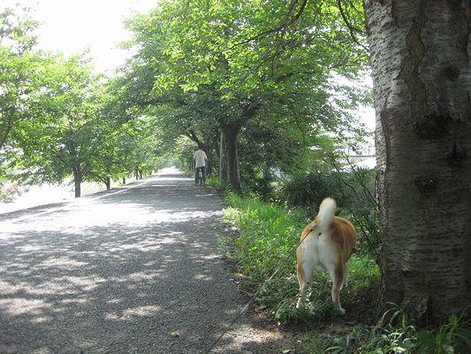 木陰で散歩