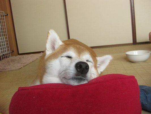食後の昼寝