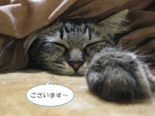 眠い・・・