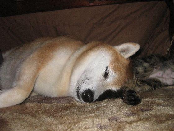 熟睡中だワン・・・