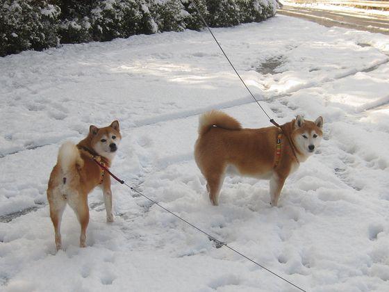 雪っていいよね~