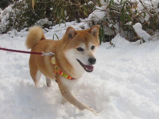 雪ってサイコー!